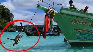This Monkey Attacked Our Boat (Phi Phi Monkey Beach) | JTDaily 9