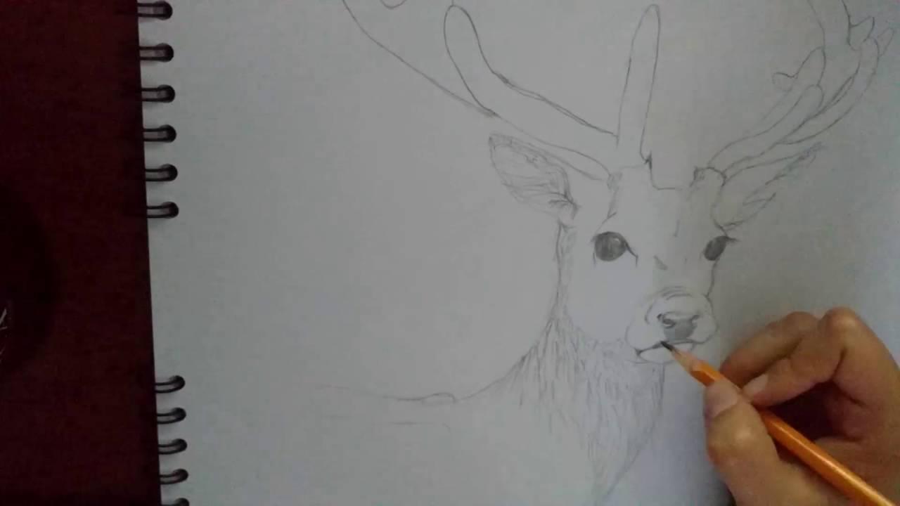 Dibujo De Venado