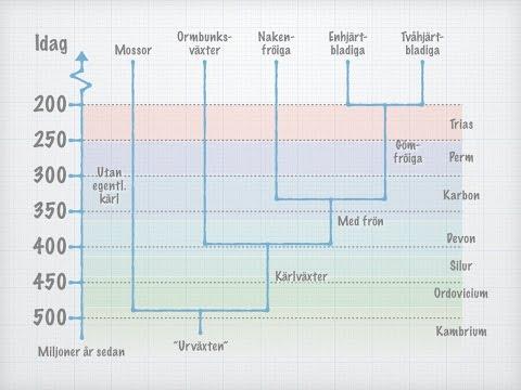 Växternas systematik