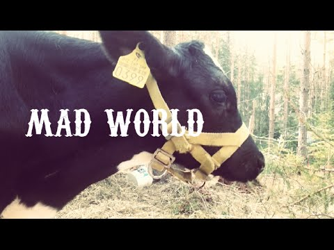 Mad World - Gary Jules | VeganPirateNinja