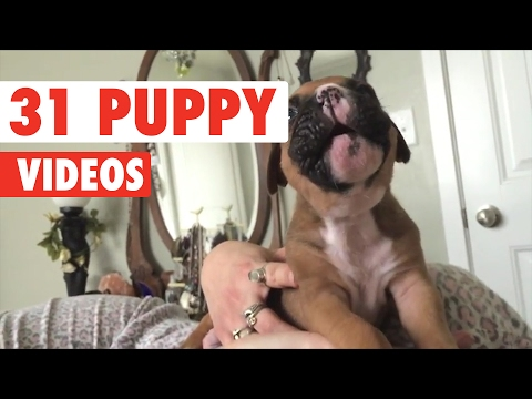 31 Cute Puppies Video Compilation 2017
