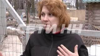 Лев в зоопарке напал и растерзал пьяную девушку-нарушительницу.