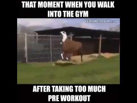 pre workout llama youtube