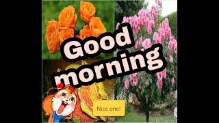 Best Roses Flowers Collection Romantic Good Morning Animated Ring And Song Status