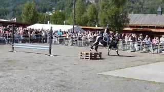Dyrskun Seljord 2013 Teil 1 / Del 1