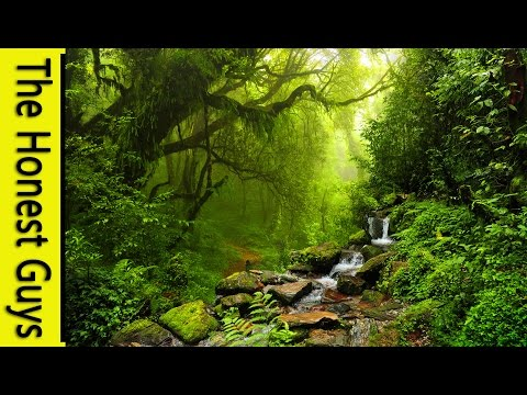 1 HOUR of UPLIFTING CLASSICAL MUSIC for Study or Relaxation