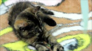 Плюшевый котёнок ищет хозяина