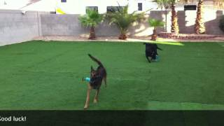 Easy Frisbee Dog Training | Sit Means Sit
