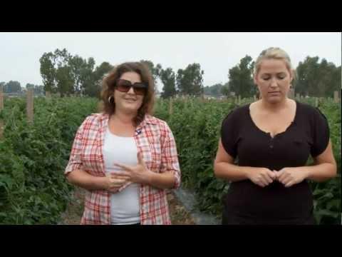 Suzie's Organic Farm in San Diego