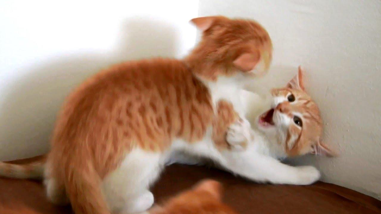 cute kittens screaming