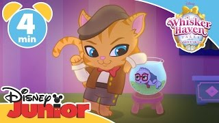 Whisker Haven Tales | Chowing Down | Disney Junior UK