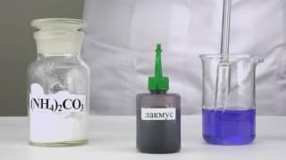 Гидролиз карбоната аммония (индикатор лакмус)