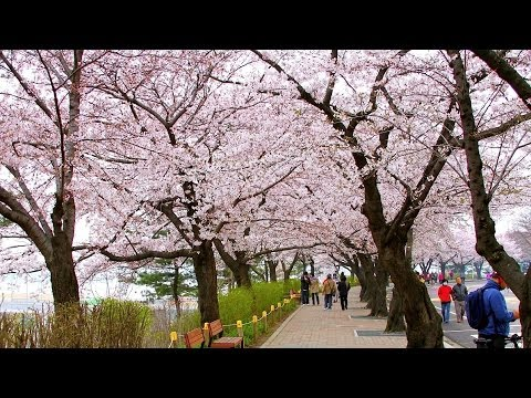 Best Time to Visit | Seoul Travel