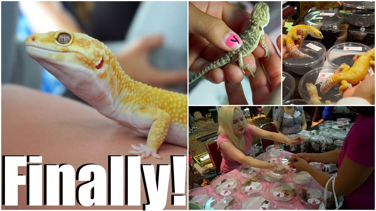 Getting My Leopard Gecko, The Movie! + Portland Metro Reptile Expo Footage