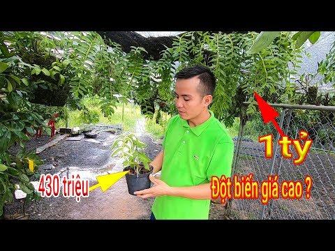 Sốc với những nhánh Lan rừng tiền tỷ ở Cửa hàng Lan rừng Tây Nguyên số 9