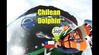 Chilean Dolphin - Chile 360 *English #ThePatuo 72