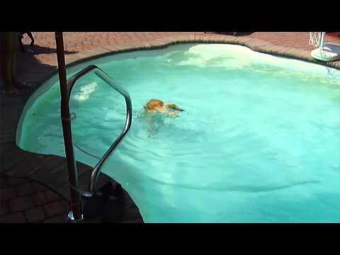 Underwater Swimming Dog