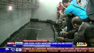 Penyelundupan Ribuan Kura-Kura Langka Via Bandara Soekarno-Hatta Digagalkan