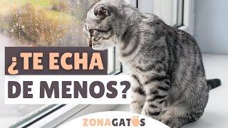 ¿Tu gato TE ECHA DE MENOS CUANDO TE VAS?