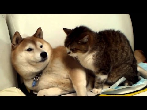 Смешные коты и собаки фото