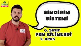 Sindirim Sistemi | 6. Sınıf Fen Bilimleri Konu Anlatımları #6fnblmlr