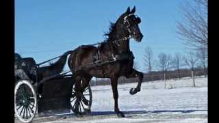Sold Dutch Harness Horse Crossbred