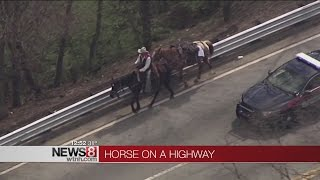 Mane highway: Cowboy adds horsepower to busy Atlanta freeway