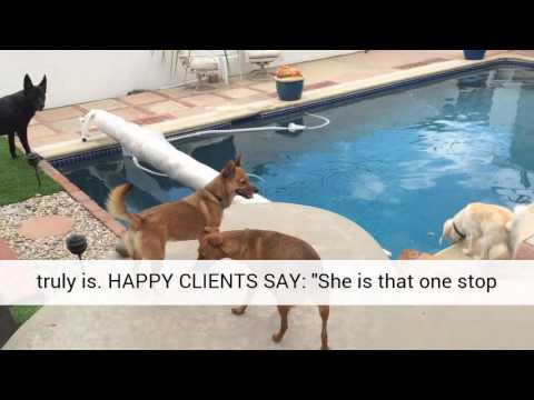 Dog daycare doggy daycare socializing dogs west hills los for Dog boarding los angeles