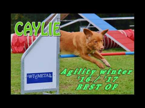 Agility Best of - winter 2016/17 - Nova Scotia Duck Tolling Retriever Caylie