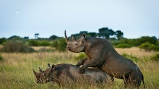 Video Animal  The beauty of wildlife when copulation  So beautiful