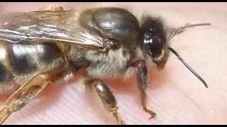 ошибки пчеловода в сентябре, которые могут привести к гибели пчелосемей