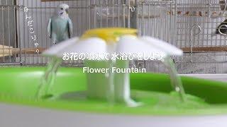 水浴び練習中~♪ thumbnail
