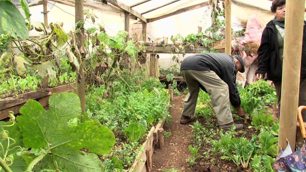 Elige vivir sano huertos org nicos de tom youtube for Preparar el huerto en invierno