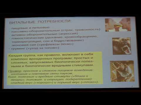Вячеслав Дубынин, МФК весна 2018, лекция 3, мозг и потребности
