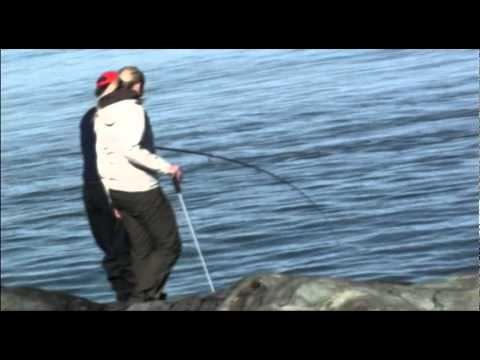 Testfiske i trondheimsfjorden