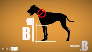 Pet Measuring Video Guide