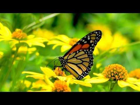 Картинки с бабочками и цветами!¡!♡😊🌹