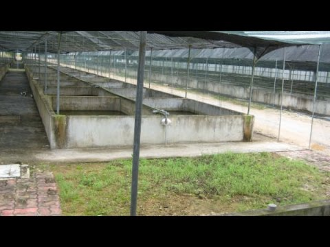 Local Goverment Fish Farming Project (by Marine Reef Solutions)
