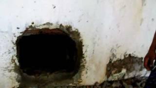 Video Bat Guano.AVI