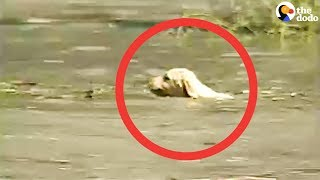 Cameraman Rescues Puppy Caught In Flood | The Dodo