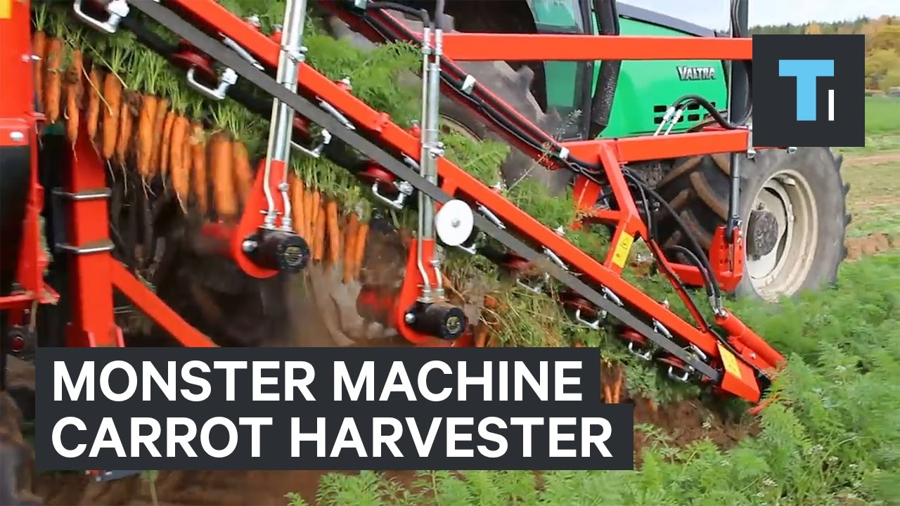 This monster machine is the ultimate carrot harvester