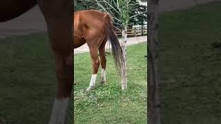 Azgın At