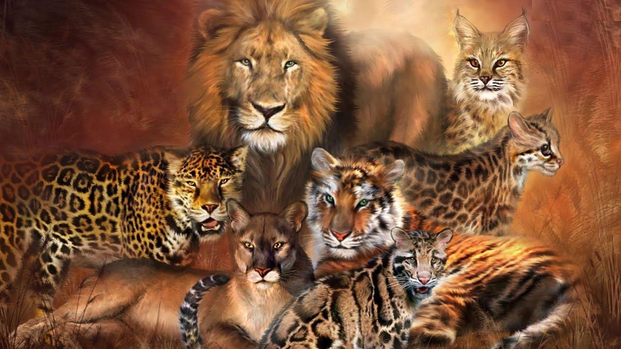 Открытки львы и тигры, для натальи николаевны