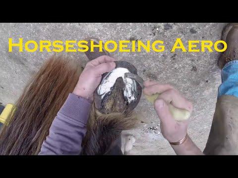 Horse Shoeing Aero