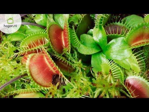 Plantas carn voras cuidados y composici n youtube - Cuidado de plantas de interior ...