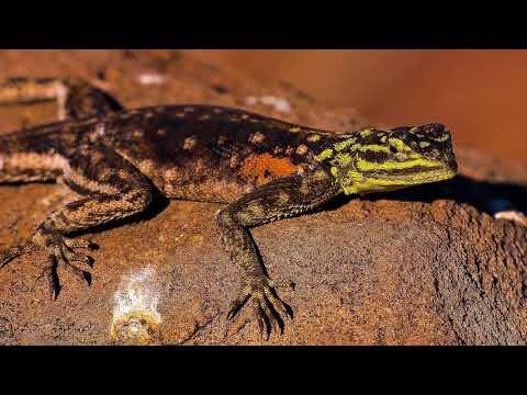 Nikon 200-500mm f5.6 Wildlife Photography NAMIBIA 2017
