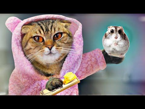 Вопрос: Келласская кошка – что это за животное?