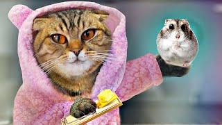 ОЧЕНЬ СТРАННЫЙ ДЕНЬ ДЛЯ Кошки и хитрое животное
