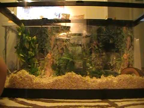 How To Setup A Corn Snake Terrarium Youtube