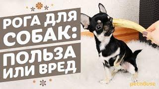 Рога в рационе собак: польза или вред?
